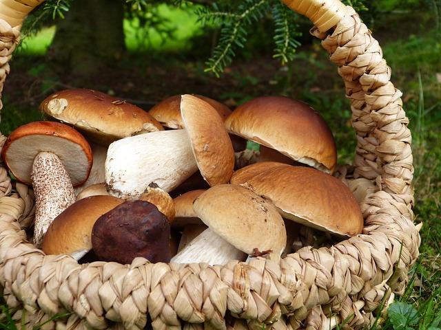 Gesunde Pilze